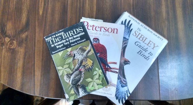 Peterson and Sibley bird guides