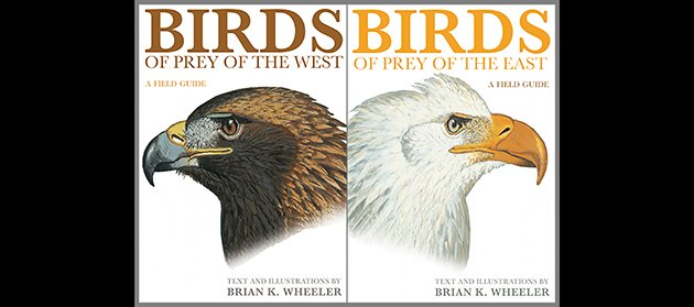 Birds Of Prey Of The East Birds Of Prey Of The West Review Of Two Field Guides 10 000 Birds