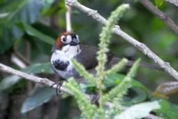 Grassy Green Space in the Central Valley- Trash Habitat or Prime Real Estate for Oddball Birds?
