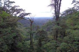 Lesser Known Places for Birding in Costa Rica- Mi Cafecito