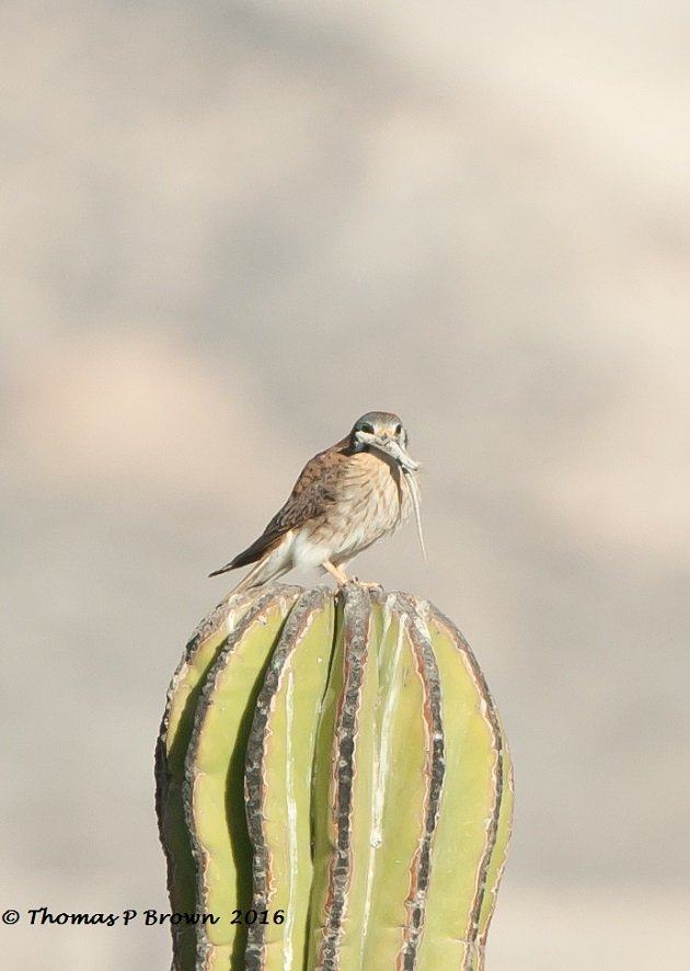 camping birds-7