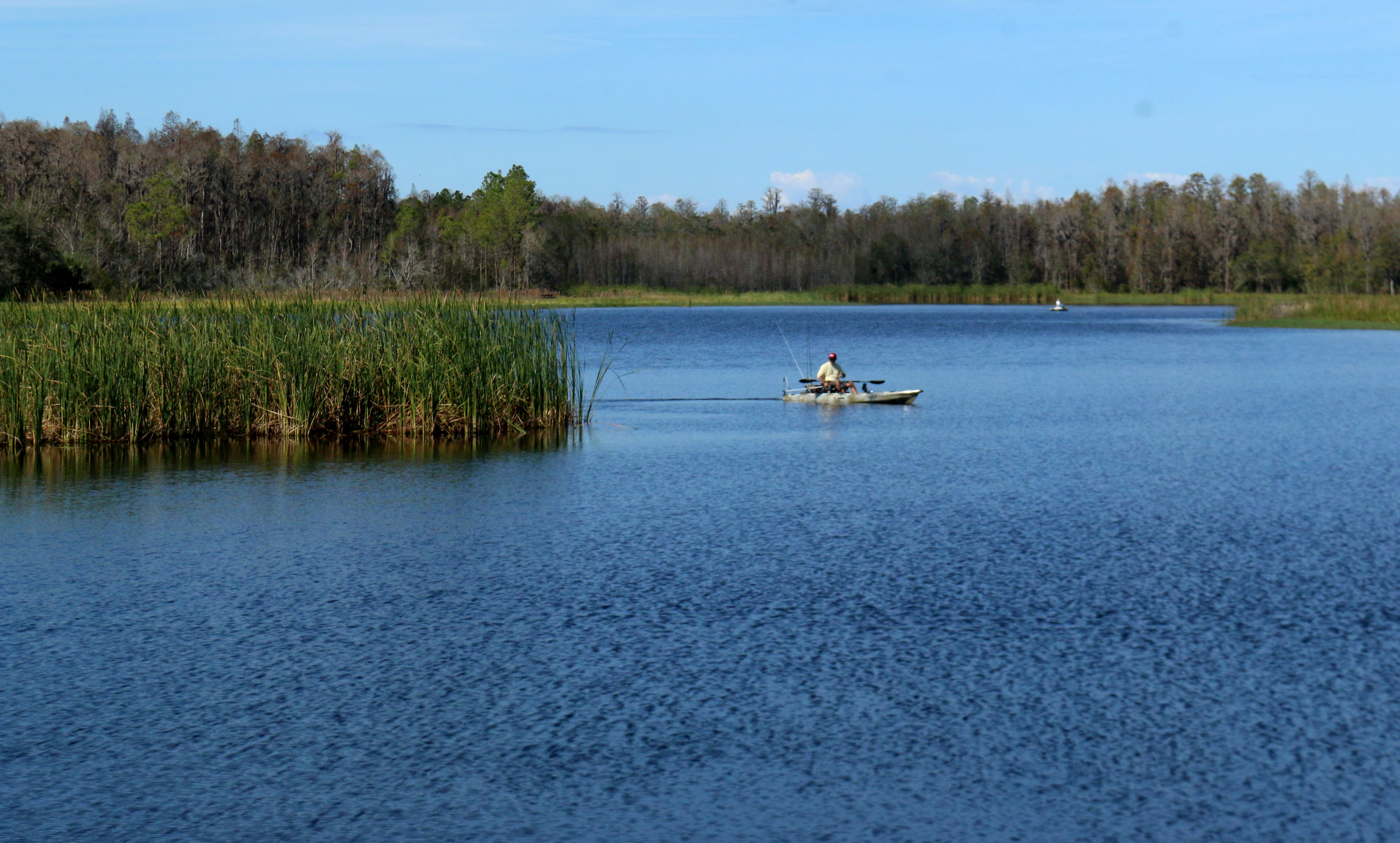 nature, landscape, florida state park
