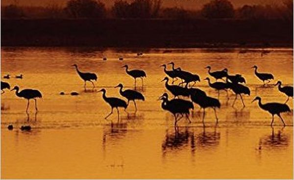 cover image of cranes against a sunset