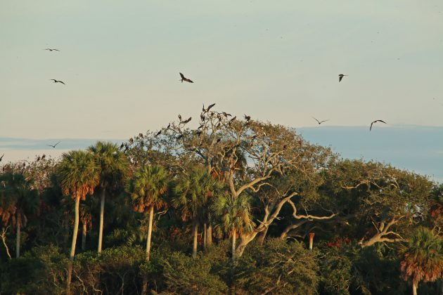 cedar key, nature, landscape, florida