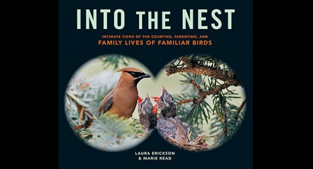 Producing A Book About Birds And Nesting Is Dangerous Business First Of All There The Cuteness Factor Truth That Are Few Images Cuter