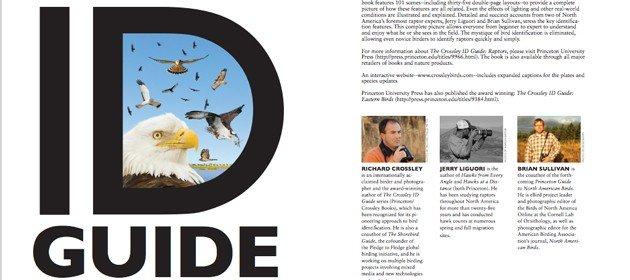 10000 Birds The Crossley ID Guide Raptors