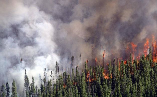 Crowning fire in spruce forest -- Karen Murphy