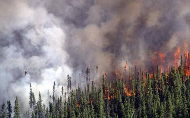 Crowning fire in spruce forest -- Karen Murphy
