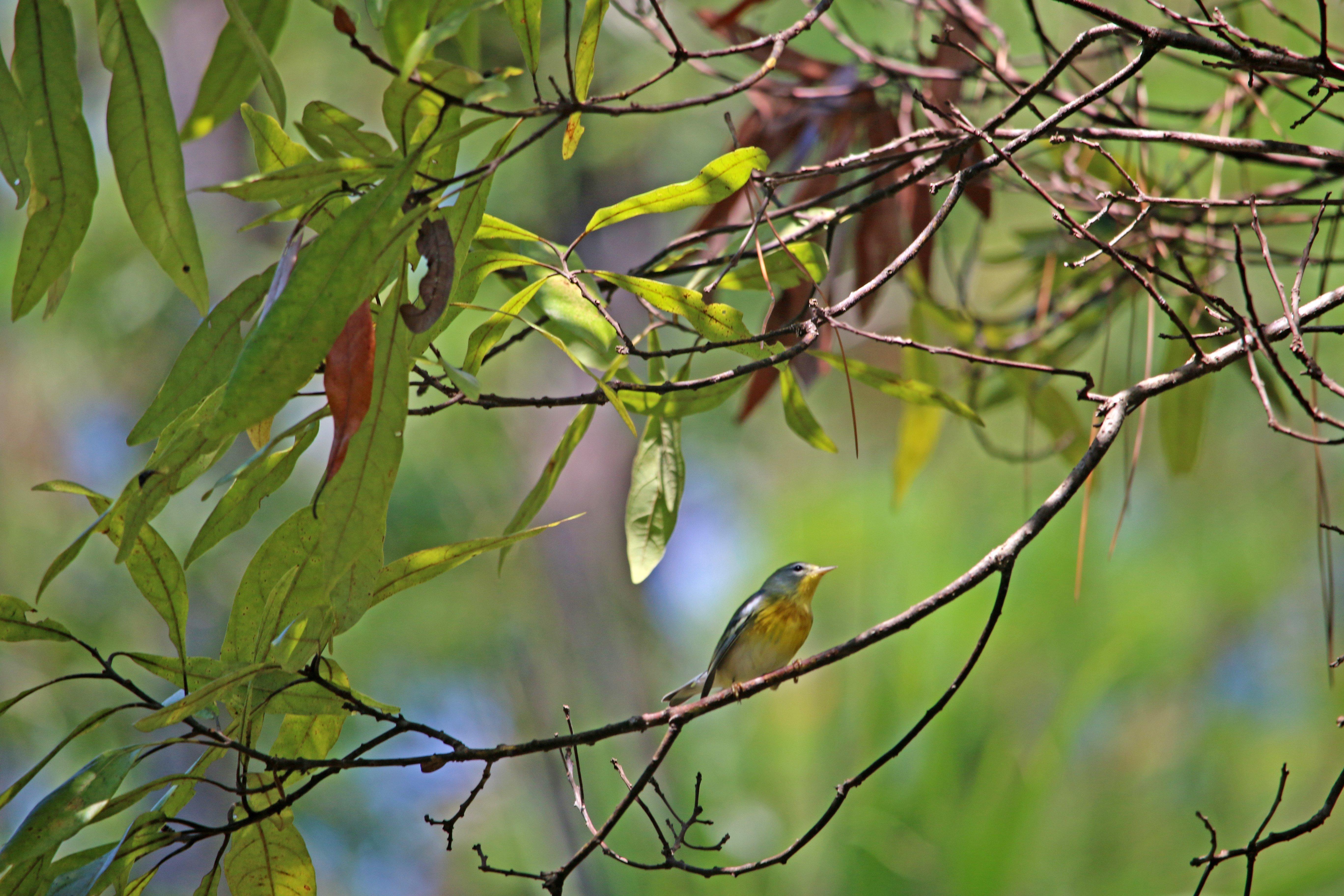 florida, state park, nature, birding