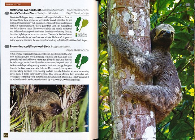 10,000 birds birds of kruger national park and wildlife of ecuadori like sloths there are no aspersions on the authors implied by ending this review with this photo i simply like sloths