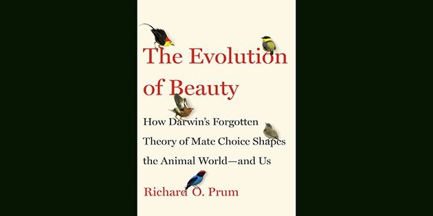 The Evolution of Beauty: How Darwin's Forgotten Theory of Mate Choice Shapes the Animal World – and Us: A Book Review