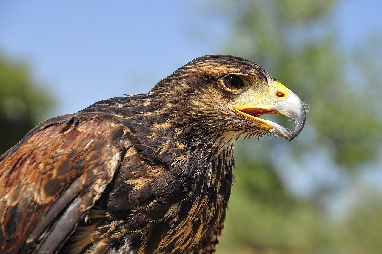 nature, eagle, golden eagle, mexico, state bird