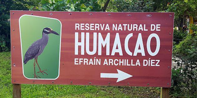 Birding Puerto Rico's Humacao Nature Reserve