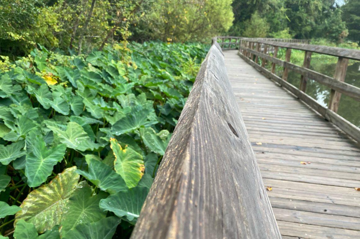 Boardwalk at Tom Brown Park