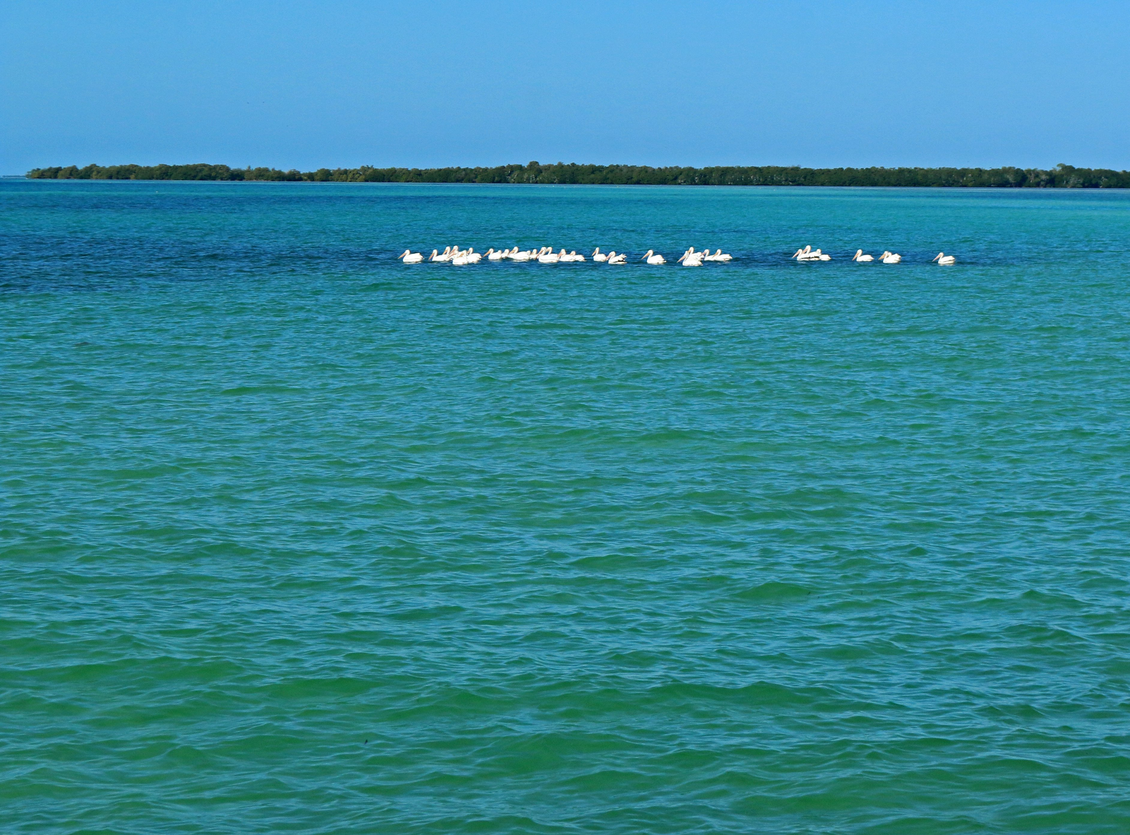 florida keys, nature, landscape