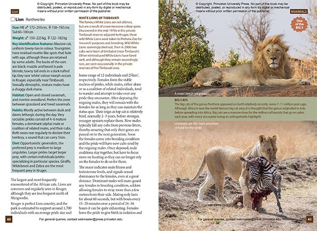 Lion page 40 and 41