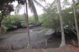 Mangrove Birds of Costa Rica