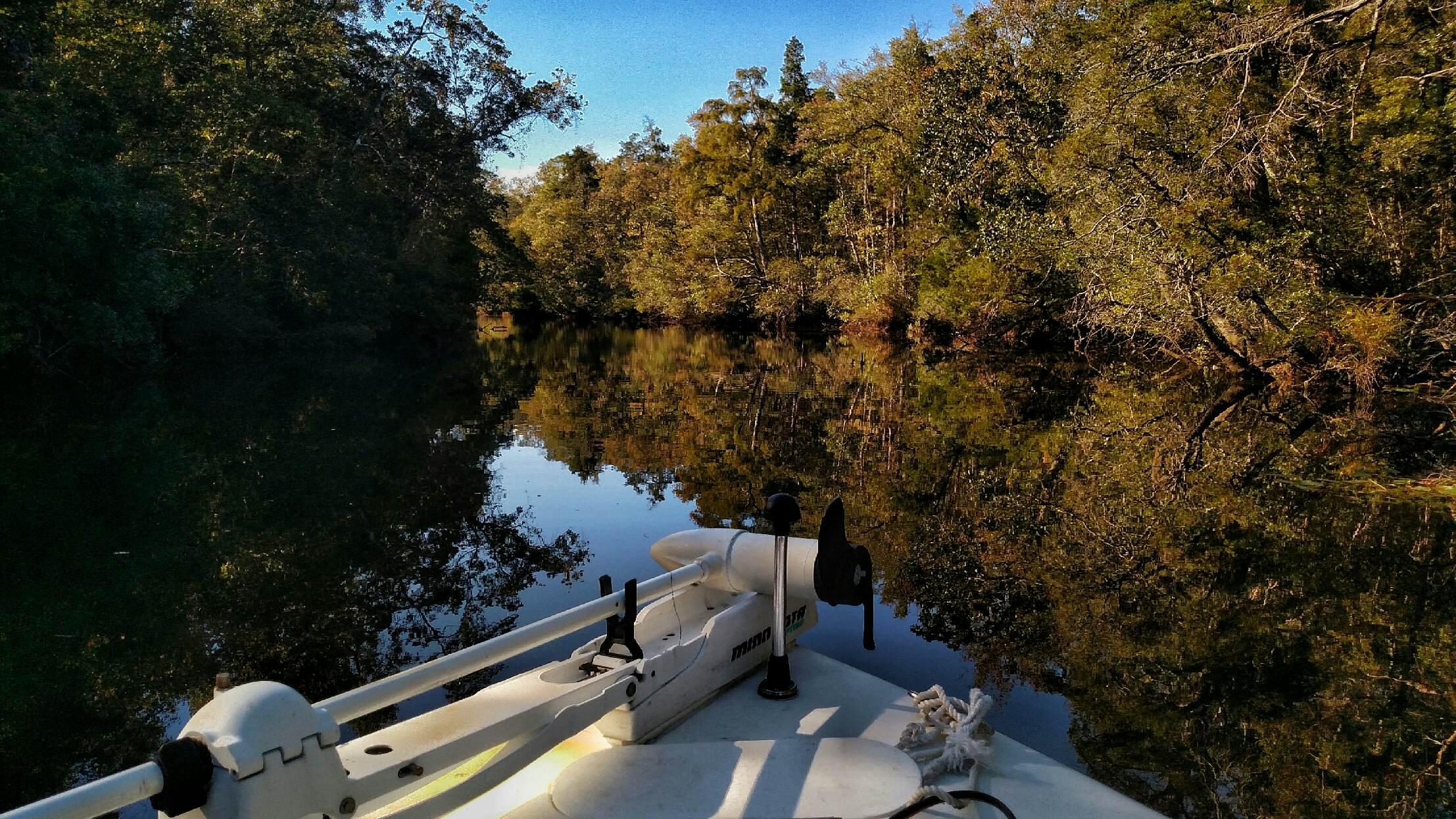 florida, nature, landscape, birding