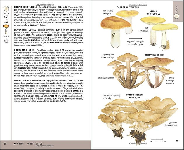 Peterson Field Guide to Mushrooms of North America, Second Edition: A Field Guide Review