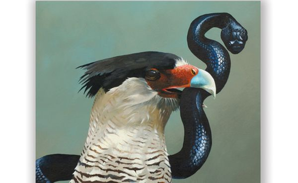 Crested Caracara with snake by Matt Adrian