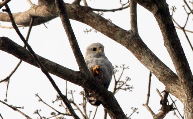 Diabolical Raptor Quiz: Mystery in the Trees