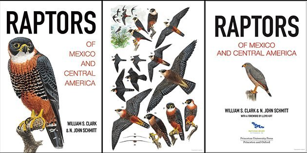 Raptors of Mexico and Central America: A Book Review