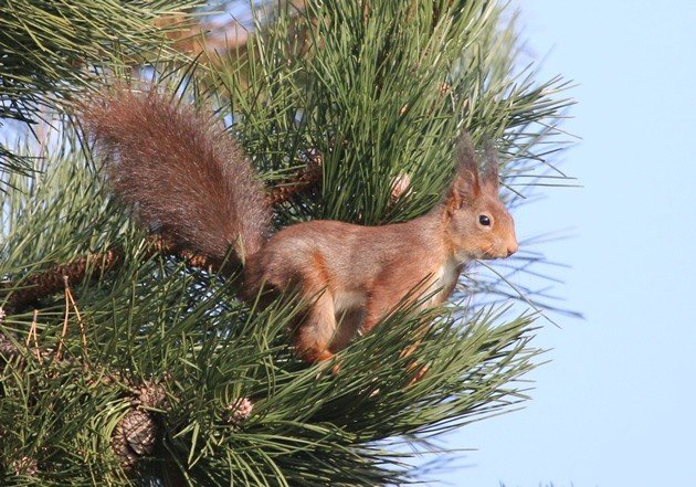I still know my audience \u2013 this is primarily a blog read by birders in North America who see the term \u201csquirrel\u201d as little ... & 10000 Birds | The squirrel next door