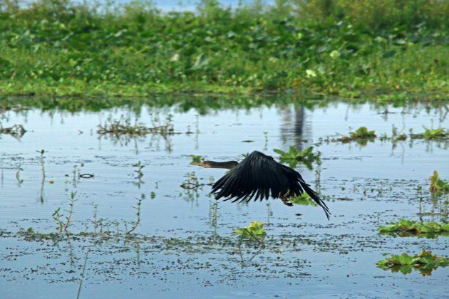 birding, florida, landscape, nature