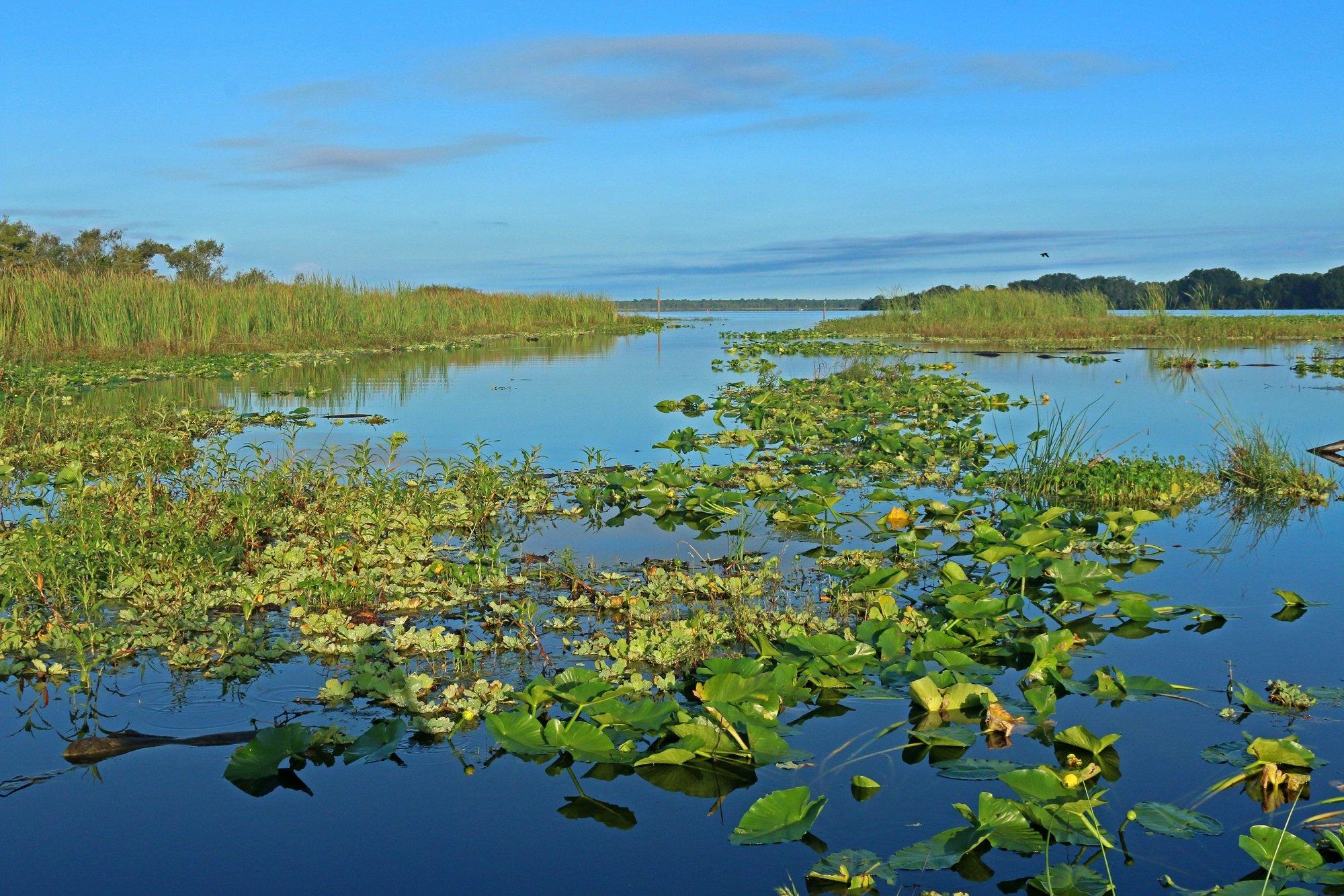 reservoir, florida, nature, birding
