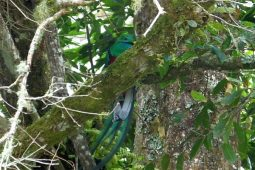 High Elevation Birding in Costa Rica at Providencia