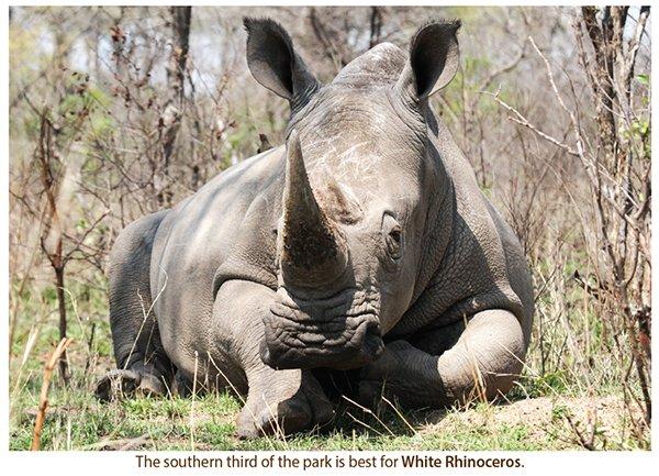 rhino600