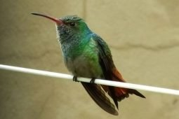 The Hummingbirds Out Back