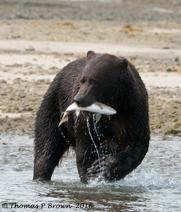 salmon-dinner-7