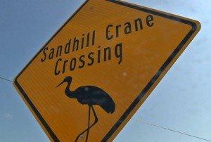 Sandhill Crane Crossing Sign