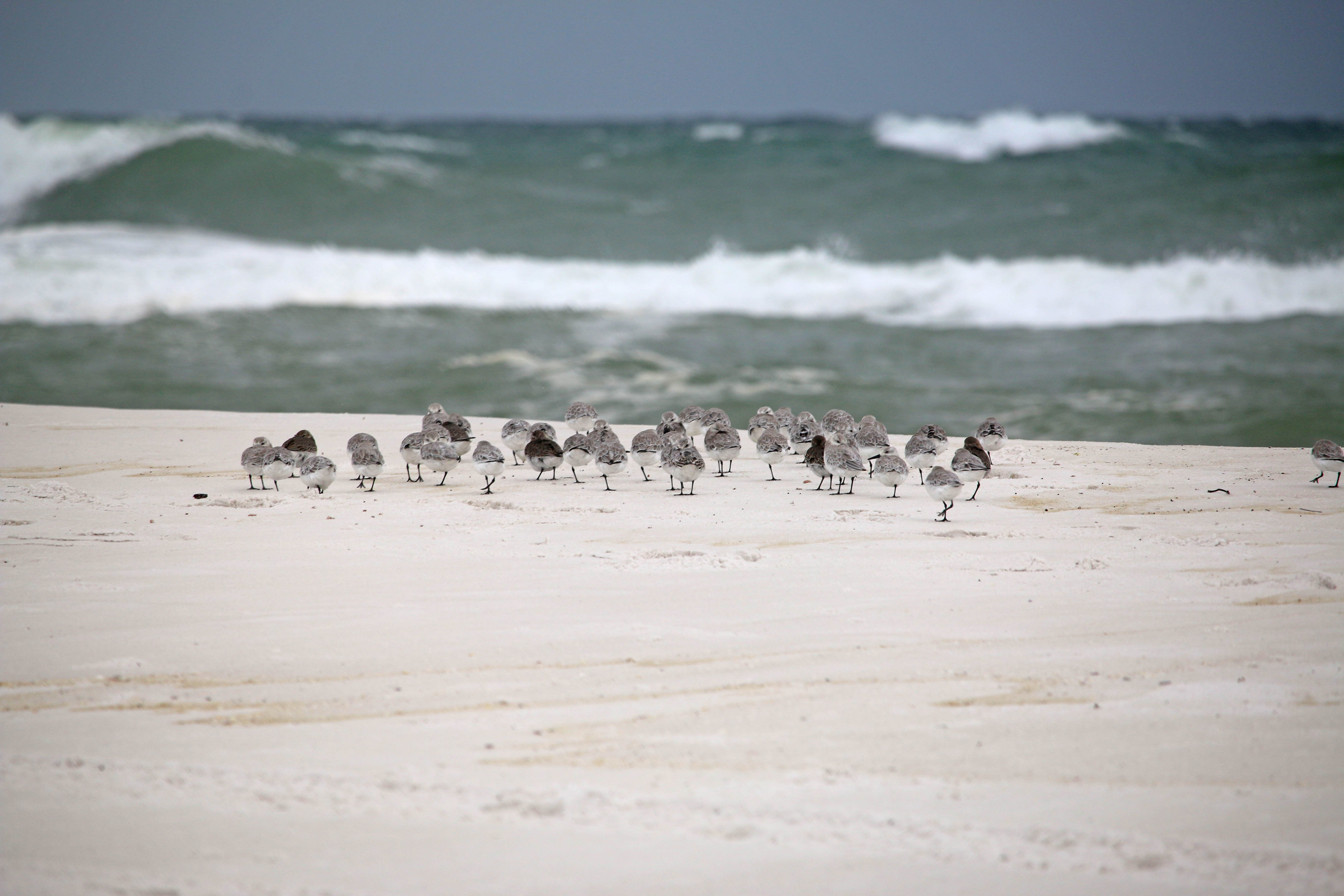emerald coast, florida, birding, birds, storm