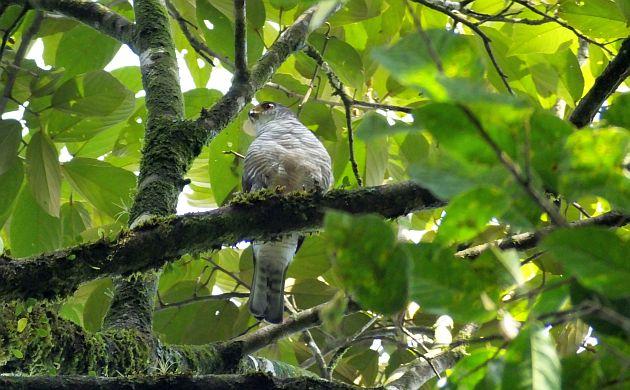 tiny-hawk