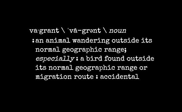 Birding Terms and Dictionary Definitions: Vagrant