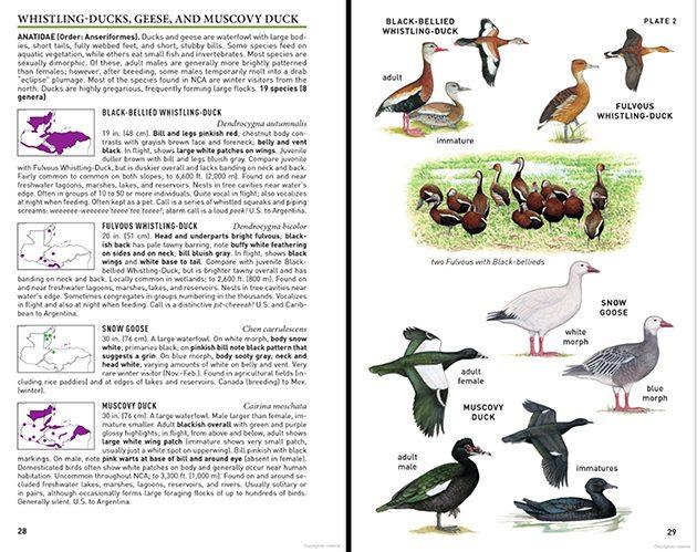whistling-ducks