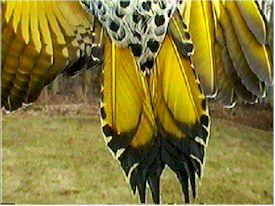 wildbirdsunlimt