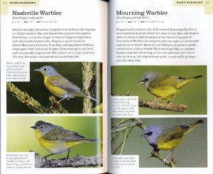wright.warblers