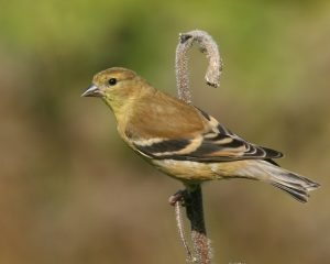 www.birdspix.com